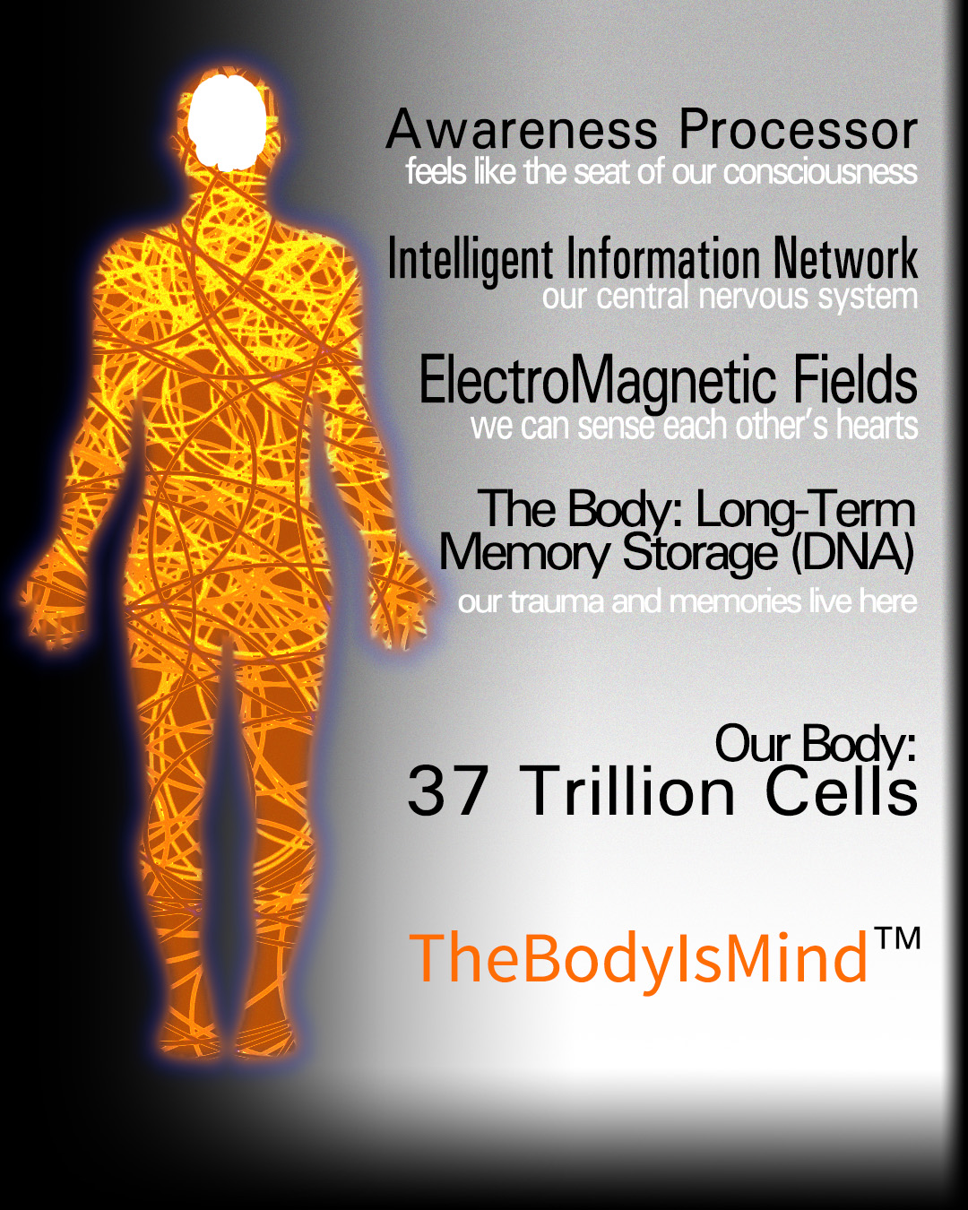 Our body averages 37 Trillion cells